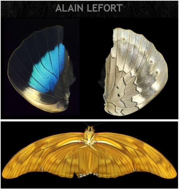Alain Lefort_ Les Brûlants