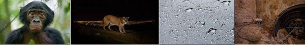 WPP2014_Ziegler_Winter_Varesvuo_DAmicis