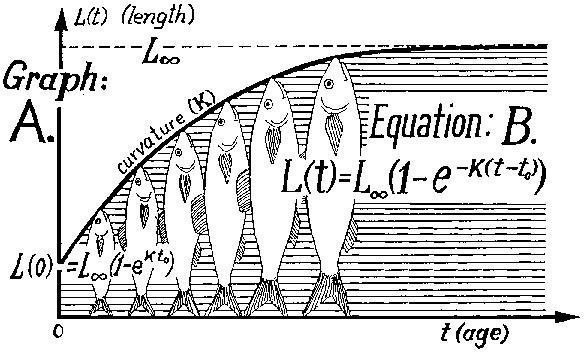 Équation de Von Bertalanffy