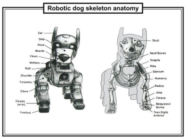France Cadet Robot-chien squlette