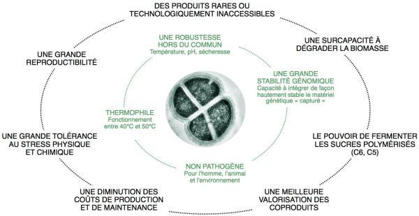 Deinococcus_radiodurans_DeinoveCom