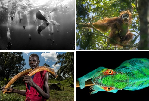 WorldPressPhoto_animals