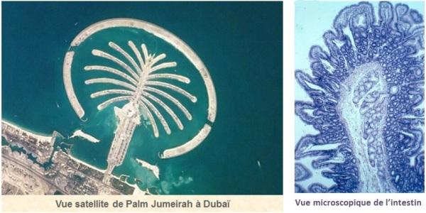 Dubai_PalmJumeirah_IntestinGrele